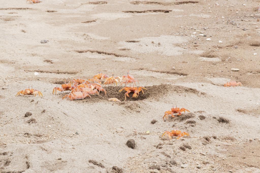 Isla de la plata Equateur crabes