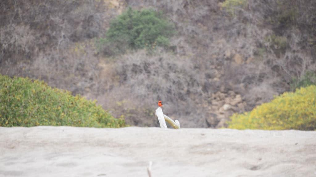 Puerto Lopez oiseau plage
