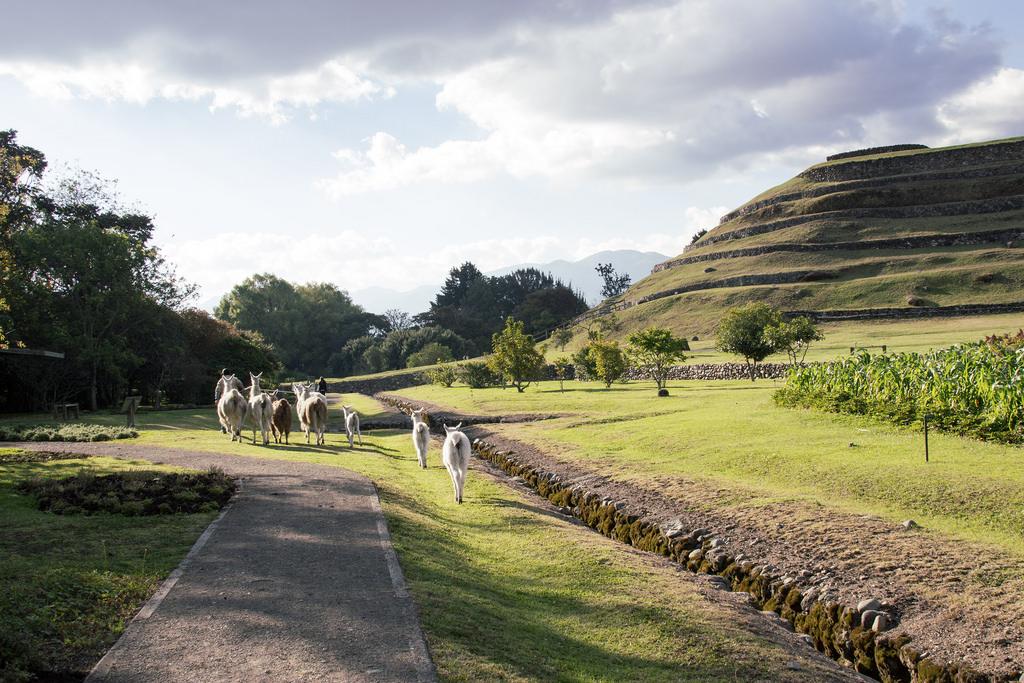 Cuenca ruines des Incas Lamas