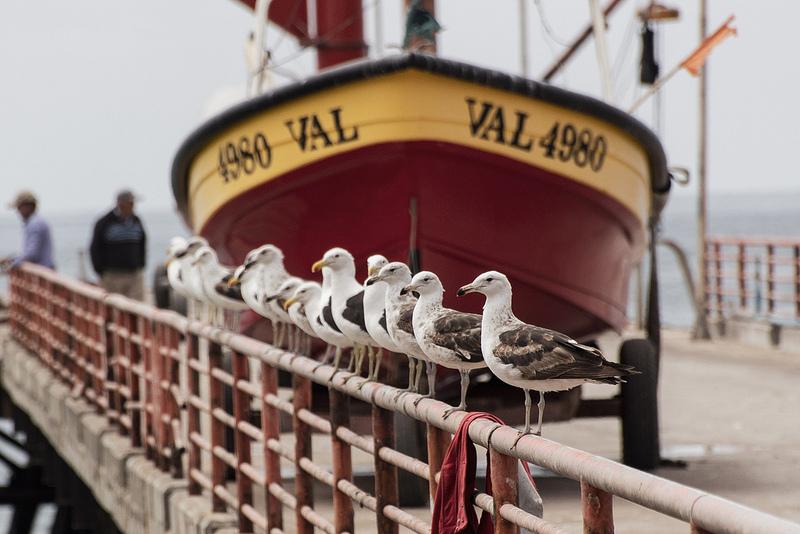 Coeur de Voyageurs Valparaiso Chili 5