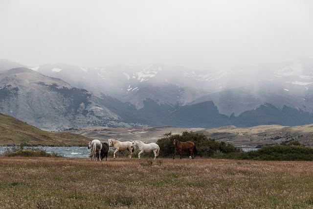 Coeur de Voyageurs Torres del Paine Chili 1