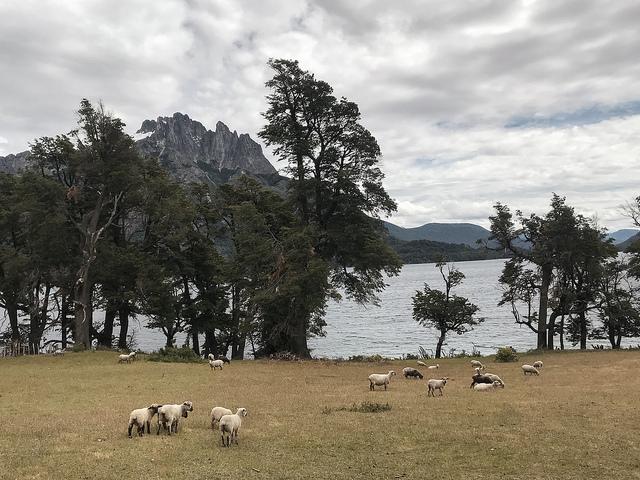 Coeur de Voyageurs Parc Lanin Argentine 3
