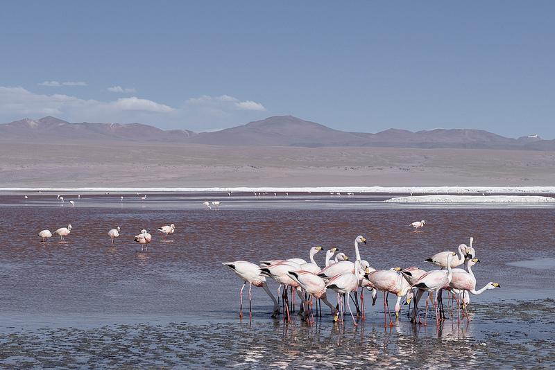 Sud Lipez Bolivie Coeur de Voyageurs 3