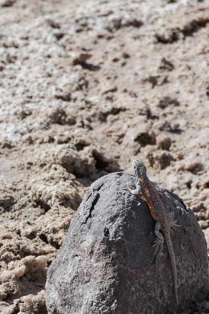 Desert Atacama Coeur de Voyageurs 4