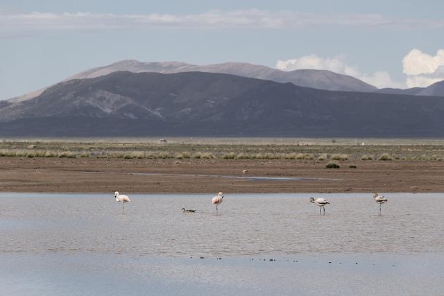 Laguna Pozuelos Argentine Coeur de Voyageurs 5