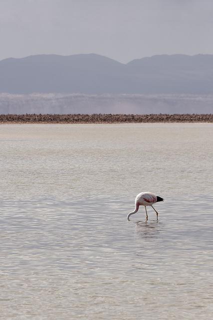 Desert Atacama Coeur de Voyageurs 9