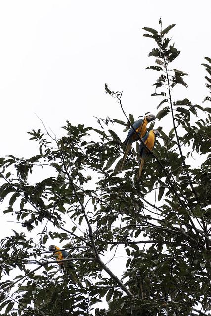Amazonie Cuyabeno Equateur Coeur de Voyageurs 28