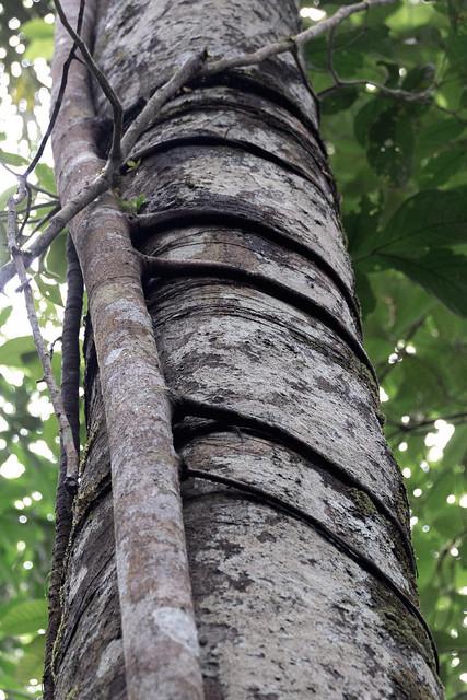 Amazonie Cuyabeno Equateur Coeur de Voyageurs 26