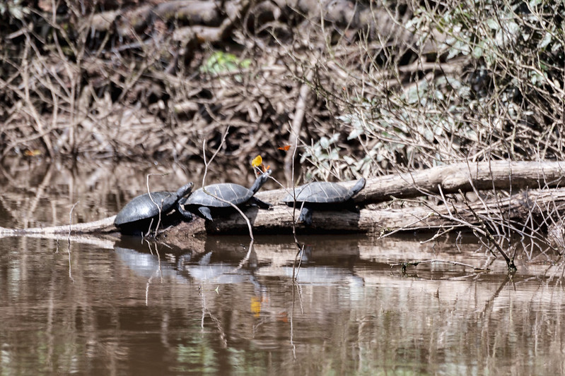 Amazonie Cuyabeno Equateur Coeur de Voyageurs 3