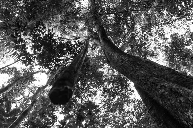 Amazonie Cuyabeno Equateur Coeur de Voyageurs 27
