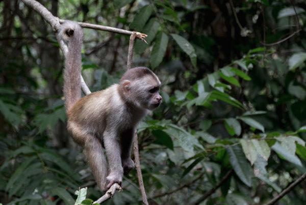 Amazonie Cuyabeno Equateur Coeur de Voyageurs 52