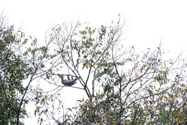 Amazonie Cuyabeno Equateur Coeur de Voyageurs 18