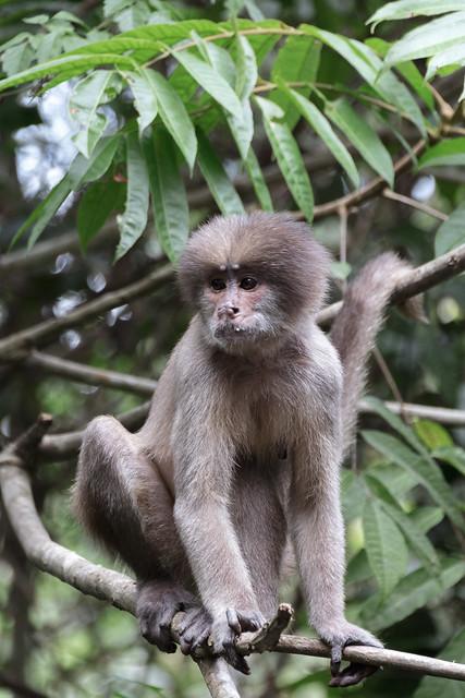 Amazonie Cuyabeno Equateur Coeur de Voyageurs 42