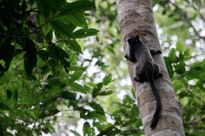 Amazonie Cuyabeno Equateur Coeur de Voyageurs 14