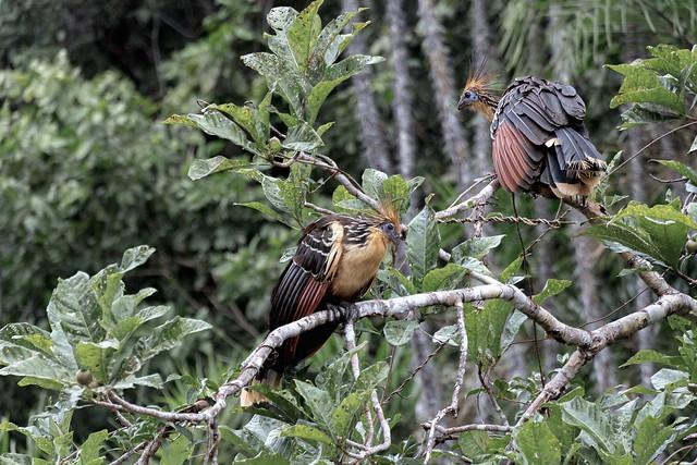 Amazonie Cuyabeno Equateur Coeur de Voyageurs 21