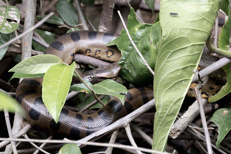 Amazonie Cuyabeno Equateur Coeur de Voyageurs 10