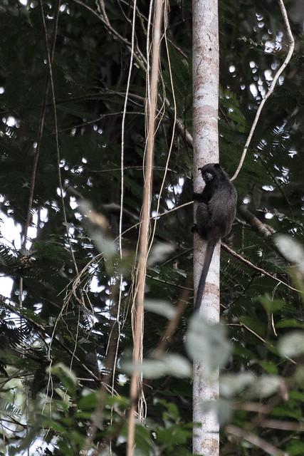 Amazonie Cuyabeno Equateur Coeur de Voyageurs 36