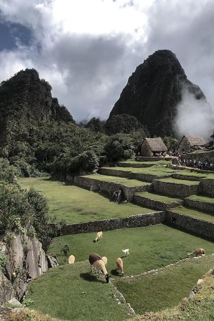 Machu Picchu Perou Coeur de Voyageurs 35