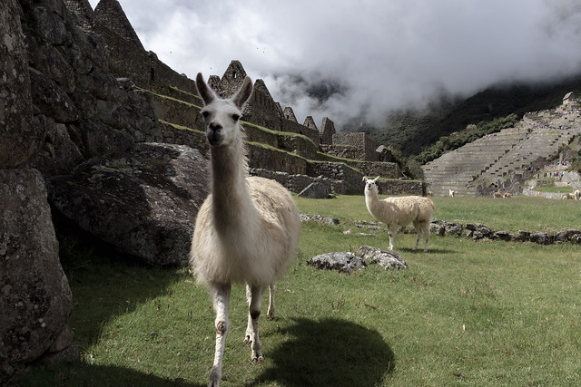 Machu Picchu Perou Coeur de Voyageurs 15