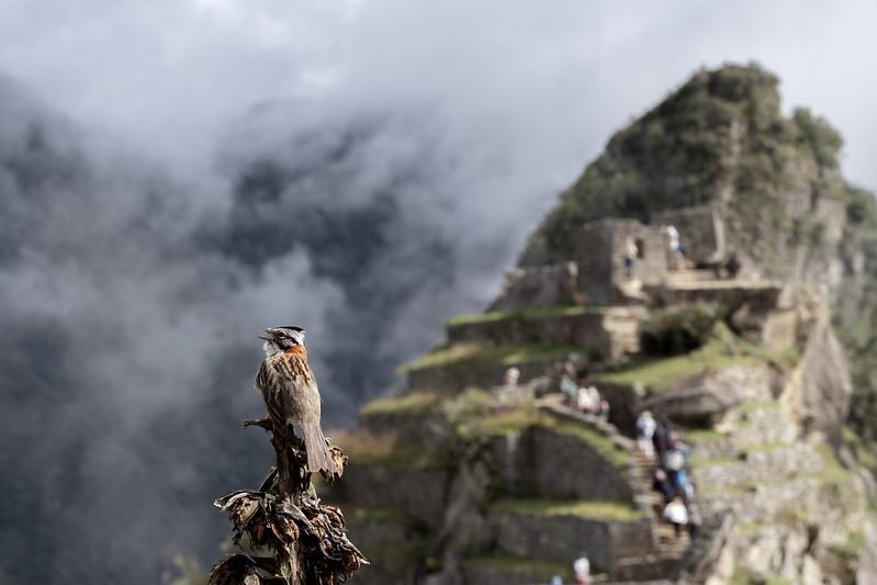 Machu Picchu Perou Coeur de Voyageurs 3